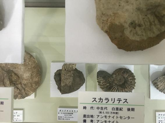アンモナイト化石.JPG